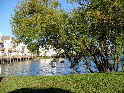 Community view lake