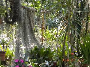 Spanish Moss
