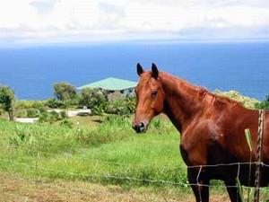 Cliffhouse's Horse