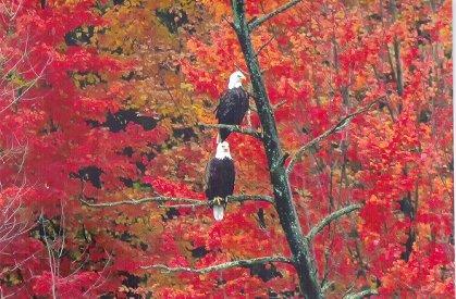 eagle visitors