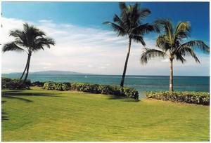 yard and ocean