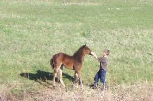 Guest meets new colt