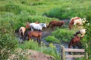 Horses at the ranch