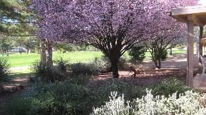 B-Back Yard (spring)