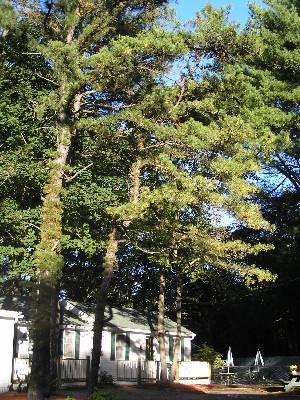 Exterior w/Pines