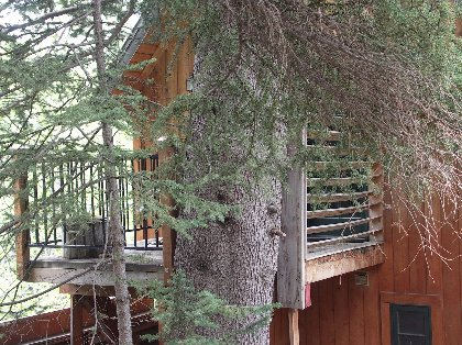 Tree House Deck