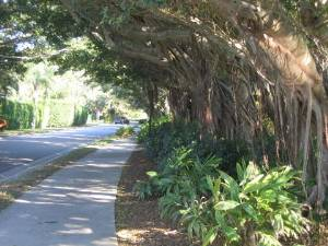 Walking Banyan Paths
